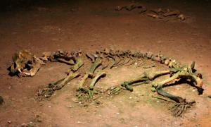 Esqueleto de un oso cavernario prehistórico. Fuente: Fizped / CC BY-SA 3.0