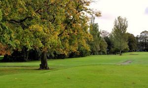 Los árboles de hadas sirven como puerta de entrada para que las hadas viajen entre mundos.