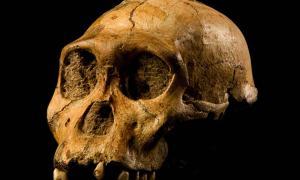 "cráneo de Malapa homínido 1 (MH1) de Sudáfrica, llamado ""Karabo"". Los restos fósiles combinados de este macho juvenil se designan como el holotipo para Australopithecus sediba. Fuente: CC BY-SA 4.0"