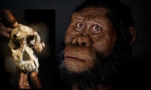 La reconstrucción facial de Australopithecus anamensis por John Gurche fue posible gracias a la generosa contribución de Susan y George Klein. Fotografía de Matt Crow, cortesía del Museo de Historia Natural de Cleveland.