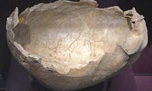 Copa del cráneo, encontrada en la cueva de Gough, Somerset, Inglaterra. Alrededor de 14,700 años, este cráneo lleva marcas de corte infligidas poco después de la muerte para remover los tejidos blandos y dar forma al cráneo en una taza.