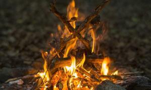 Se descubrieron restos de alimentos carbonizados de hogares, dejados por humanos antiguos que comían almidón. Fuente: PetarPaunchev / Adobe.