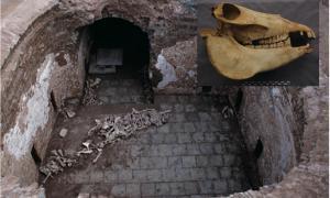 la tumba de Cui Shi con huesos de animales que revela la evidencia de los antiguos nobles chinos jugando al polo de burro. Recuadro: Una calavera de uno de los burros de Cui Shi. Fuente: J. Yang & S. Hu / Antiquity Publications Ltd