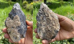 ambos lados del reciente hacha de hueso etíope se encuentran. Fuente: Berhane Asfaw, Universidad de Tokio / PNAS