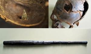 Cráneos y arma encontrados en el sitio de batalla de Tollense, que ahora se cree que es el sitio de masacre más antiguo de Europa.