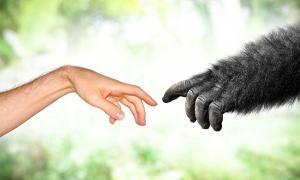 Los científicos han encontrado evidencia importante de un salto evolutivo entre los homínidos antiguos.