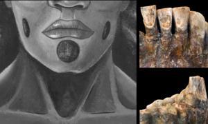 Dientes de OH1 (John C Willman) y los piercings faciales propuestos. (Lou-Octavia Mørch)