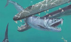 Los científicos que estudian fósiles de 55 millones de años utilizando tecnología innovadora han revelado que después de la extinción de los dinosaurios, las anchoas gigantes deambularon por el mar. En la imagen: impresión artística de la anchoveta con dientes de sable capturada por una ballena temprana. Fuente: © Joschua Knüppe