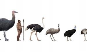 Pachystruthio dmanisensis, se han descubierto nuevas especies de aves gigantes. Fuente: nicolasprimola / Adobe Stock.