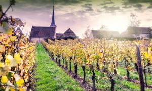 Las fuentes de ADN de uva en toda Europa se habían conectado con semillas romanas antiguas. Fuente: : Grecaud Paul / Adobe Stock