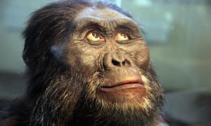 Una reconstrucción de la cabeza de un Australopithecus afarensis. Fuente: Tim1965 / CC BY-SA 2.0