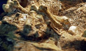 A. Los huesos de la mano de Sebida muestran que el agarre de este ancestro humano era similar al de un humano moderno. Fuente: Peter Schmid, cortesía de Tracy Kivell / University of Kent
