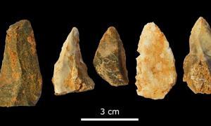 Algunas de las puntas de lanza descubiertas en la Cova de les Teixoneres. Foto: IPHES