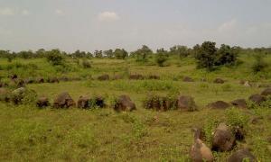 Uno de los círculos de piedra de Junapani en Maharashtra, India, que ahora se ven cada vez más como cementerios alineados astronómicamente.