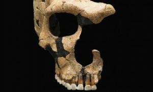un cráneo de neandertal muestra traumatismo craneal, evidencia de violencia ancestral. Smithsonian National Museum of Natural History