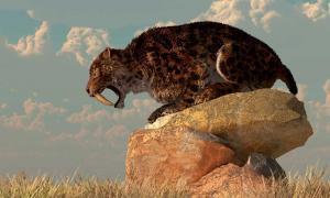 Un gato con dientes de sable se encuentra sobre una roca en una llanura cubierta de hierba. Crédito: Daniel / Adobe Stock
