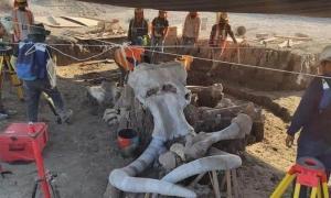 Se han encontrado fósiles de casi 70 mamuts en el futuro emplazamiento de un aeropuerto mexicano. Fuente: INAH