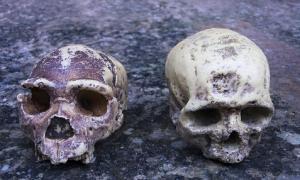ascendencia neandertal encontrada en africanos. Fuente: procy_ab / Adobe Stock