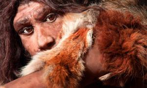 Los genetistas evolutivos que realizan un estudio del genoma han descubierto que los neandertales tenían un umbral de dolor más bajo que la mayoría de los humanos modernos. Fuente: proct_ab / Adobe Stock