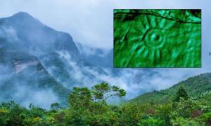 Principal: selva amazónica en Perú. Fuente: Christian/ Adobe Stock. Recuadro: Un primer plano de uno de los grabados en el monolito peruano. Fuente: Daniel Fernández-Dávila / Exact Metrology.