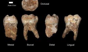 portada: Dientes humanos procedentes de la cueva de Qesem. Imagen: Profesor Israel Hershkovitz, Universidad de Tel Aviv