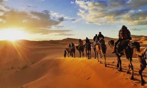 Gran parte del comercio terrestre de los radhanitas entre Tánger y Mesopotamia fue en camello. Fuente: Gaper/ Adobe Stock