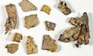 Secciones del rollo del Libro de los Doce Profetas Menores descubierto en la expedición al desierto de Judea antes de su conservación. Fuente: Shai Halevi / Autoridad de Antigüedades de Israel