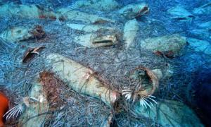 un naufragio romano con ánforas como carga se ha encontrado en la costa de Chipre. Fuente: Cyprus Dept. of Antiquities/Spyros A.Spyrou