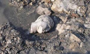 Descubierta en las ruinas de Salamis, una cabeza de mármol de una antigua estatua griega. Fuente: Maraba / Ministerio de Cultura de Grecia.