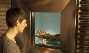 Ventana que mira hacia la celda refrigerada del Iceman. Un nuevo estudio explora el entorno en el que murió el hombre de hielo tirolés (Otzi).
