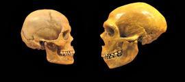 Portada-Comparativa entre los cráneos de un Humano Moderno (izquierda) y de un Neandertal (derecha). Museo de Historia Natural de Cleveland. (Wikimedia Commons)