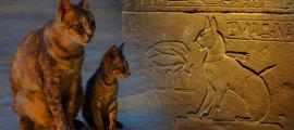 Portada - Derecha: Decoración del sarcófago del gato del príncipe Tutmosis (CC BY 2.0). Izquierda: gatos de Bou Inania (Marruecos). (CC BY-NC 2.0)