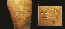 Los arqueólogos que excavan en el famoso sitio de Boxgrove en Inglaterra han identificado herramientas de hueso de caballo, las primeras herramientas de hueso jamás descubiertas en la historia de la arqueología europea. Hay marcas de raspaduras debido a la forma en que se preparó la herramienta y marcas de picaduras debido a su uso en la fabricación de herramientas de pedernal.
