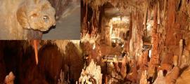 petralona-cave-main-2.jpg