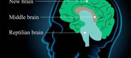 Hace tres mil años el cerebro humano se redujo en tamaño